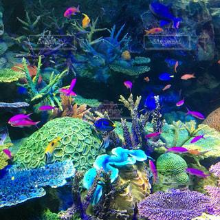 カラフルな魚たちの写真・画像素材[776032]