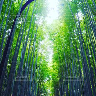 京都の竹林 - No.776035