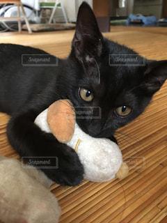 木製の表面の上に横たわる猫の写真・画像素材[779287]