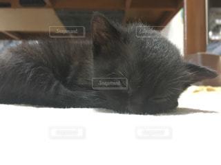 毛布の上に横になっている猫の写真・画像素材[791828]