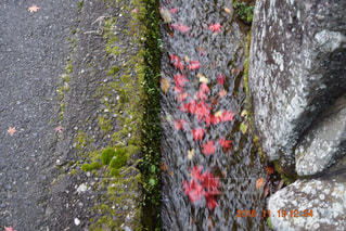 紅葉の川流れの写真・画像素材[776369]
