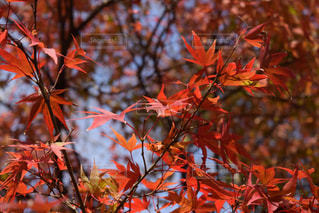 秋が来たの写真・画像素材[776372]