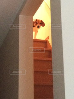 見送り ビーグル犬の写真・画像素材[776475]