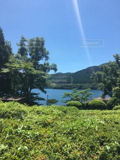 背景の木と芝生の上の虹 - No.777859