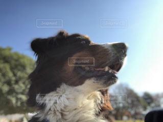 犬の写真・画像素材[903467]