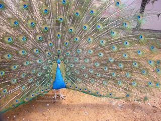 カラフルな鳥の写真・画像素材[2944740]