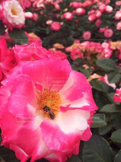 花のクローズアップの写真・画像素材[3110186]
