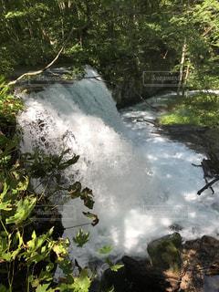 木々 に囲まれた滝の写真・画像素材[781530]