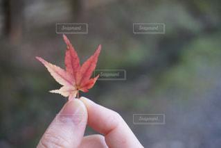 紅葉を持つ手 - No.779438