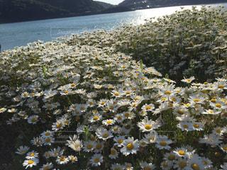 近くの花のアップの写真・画像素材[778224]