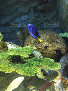水中にあるぬいぐるみの動物のグループの写真・画像素材[787678]