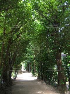 フォレスト内のツリーの写真・画像素材[780591]
