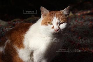 みつめる猫の写真・画像素材[930449]