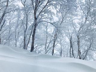雪に覆われた森の写真・画像素材[975310]