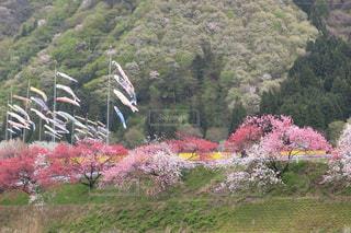 背景の山と木 - No.1055926