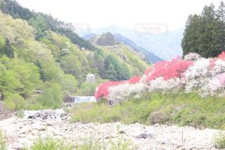 背景の山と木の写真・画像素材[1055928]