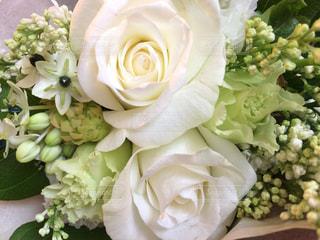 白薔薇の写真・画像素材[777977]