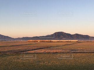 冬枯れを走る115系電車の写真・画像素材[889774]