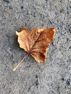 ひとひらの枯葉の写真・画像素材[778261]
