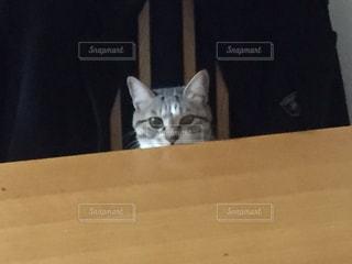 イスに座ってる猫の写真・画像素材[778299]