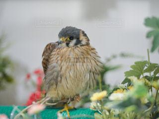 かわいい小鳥の写真・画像素材[778950]