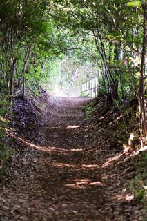 緑の林の写真・画像素材[795467]