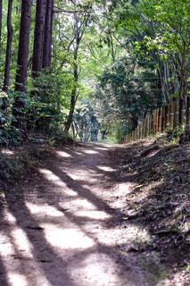 緑の林②の写真・画像素材[795483]
