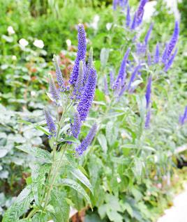 植物の上の紫色の花の写真・画像素材[2183629]