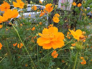 カラフルな花の植物の写真・画像素材[779218]