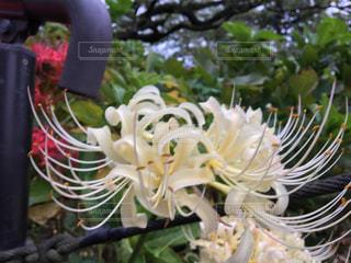 近くの植物のアップの写真・画像素材[779224]
