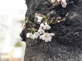 近くの花のアップの写真・画像素材[1081112]