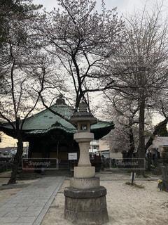 公園の真ん中の木の写真・画像素材[1081160]