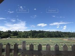 木製のフェンスの上に立つ羊の群し方の写真・画像素材[2230965]