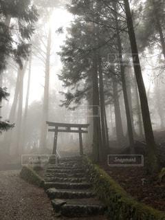 森の中の写真・画像素材[2959595]