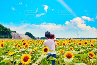 色とりどりの花のグループの写真・画像素材[781018]