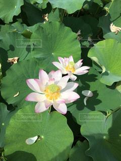 近くの花のアップの写真・画像素材[779544]