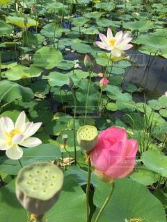 近くに池のアップの写真・画像素材[779547]