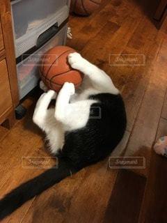 猫の写真・画像素材[113580]