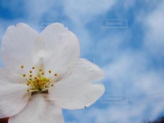 青と白 - No.780095