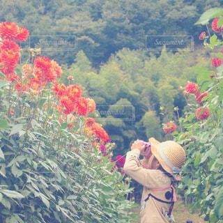 カメラ女子の写真・画像素材[781959]