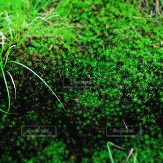 近くに緑の草の上の写真・画像素材[780112]