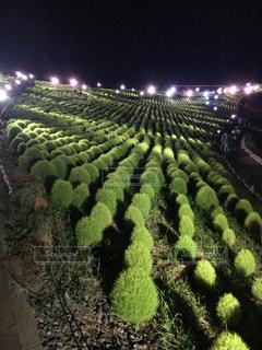 庭園の緑の植物の写真・画像素材[780655]