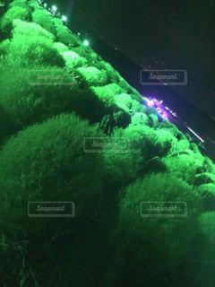 背景の木と大規模なグリーン フィールドの写真・画像素材[780659]