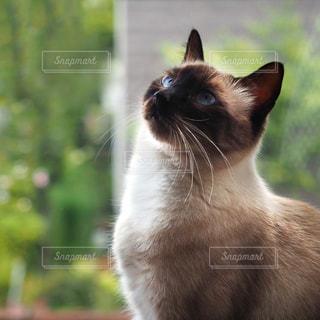 猫の顔アップの写真・画像素材[780843]