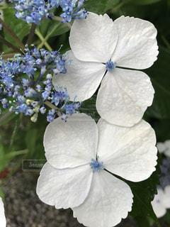 近くの花のアップの写真・画像素材[781238]