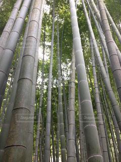 竹の木グループの写真・画像素材[781549]