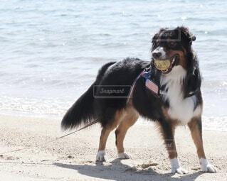 砂浜の犬の写真・画像素材[3753652]