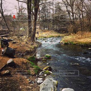 森を流れる川の写真・画像素材[780980]