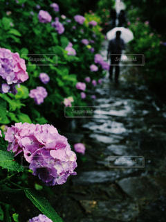 花のクローズアップの写真・画像素材[2324231]