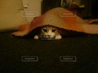 ベッドの上で横になっている猫の写真・画像素材[788147]